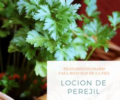 Tratamiento casero para manchas marrones | Belleza DIY Belleza Diy, Parsley, Herbs, Html, Natural, Home Made Lotion, Lighten Skin, Going Out, Herb