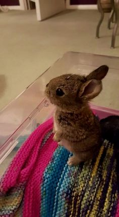case you are searching for a furry companion that is not only extremely cute, but very easy to keep, then look no further than a family pet rabbit. Cute Baby Bunnies, Funny Bunnies, Cute Baby Animals, Animals And Pets, Cute Babies, Animals Images, Funny Cats, Hamsters, Pet Rabbit