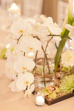We are pretty sure this is what we want for pub table centerpeices. We love the clean shape of the vase with the orchids.