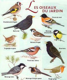 Oiseaux De Nos Jardins Bretagne : oiseaux, jardins, bretagne, Idées, Oiseaux, Ciel,, Oiseaux,, Jardins