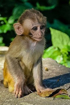 The cutest monkey pictures you've ever seen! How cute is this little guy?