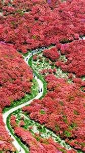 Japan Holiday Destinations - Yahoo Image Search Results