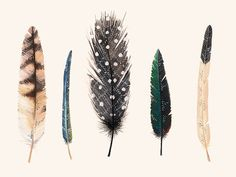 Feathers 2  8 x11 print by anavicky on Etsy