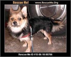 ― Michigan Pomeranian Rescue ― ADOPTIONS ―RescueMe.Org