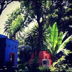 Casa azul - Frida Kahlo - note large leafed plants. Birds Nest ferns and Bird of Paradise have this effect in our garden.