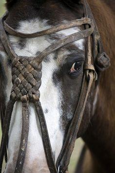 A close up of a the head of a gaucho's horse, showing the hand made bridle Horse Bridle, Horse Gear, San Antonio, Horse Love, Fauna, Horse Breeds, Saddles, Beautiful Horses, South America