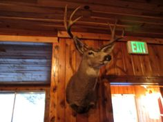 JD's Scenic Southwestern Travel Destination Blog: Duck Creek & Navaho Lake ~ Dixie National Forest, Utah!