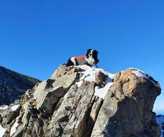 #snowpuppysunday The great thing about our Mountain Dog Challenge is visiting places you have never been, or exploring places again but with a new doggy perspective. This is Darcy, a Further Faster Mountain dog!! Join us at www.mountaindogchallenge.co.nz Pic by Vince Cooper and Mikayla! Mountain Gear, Mountain Dogs, Outdoor Gear Stores, Kayaking Gear, Running Gear, Mountaineering, Outdoor Outfit, Exploring, Perspective