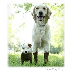 Dogs Playing in Mud