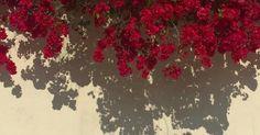 Twitter Header Pictures, Cute Twitter Headers, Cute Headers, Twitter Banner, Twitter Layouts, Pink Wallpaper Backgrounds, Aesthetic Desktop Wallpaper, Wallpaper Pc, Tumblr Wallpaper