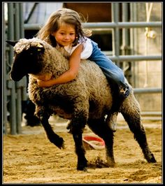 Mutton Bustin' - we had this in my town rodeo growing up. It's like bull riding for the wee ones! They even gave out trophies.