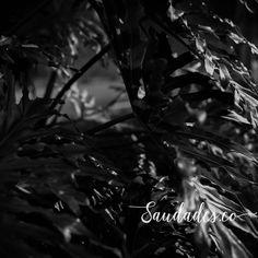 """""""Tropical 2"""", Maranhão, 2009 • foto de Daniela Picoral disponível para venda hello@saudades.co • Limited edition fine art prints curated for the interior design market."""