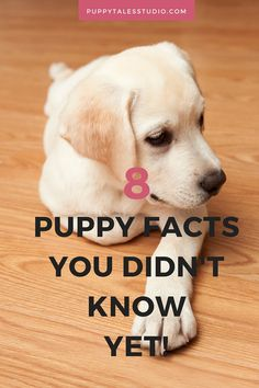 8 Dog facts you didn't know | Puppy Edition! Did you know that Chow Chow puppies are born with a pink tongue? Their tongue turns blue-black at 8-10 weeks of age.  Click through to read more awesome puppy fun facts!!