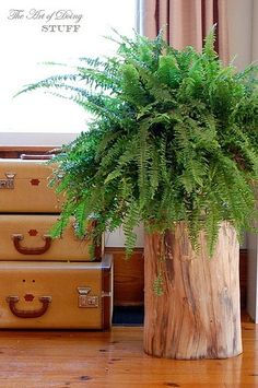 About indoor plant stands on pinterest house plants plant stands