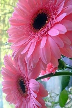 6 Couleurs Vendeur Britannique Nouveau Beau Daisy Style Pastel Cheveux Fleur Papillon//Band