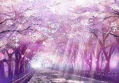 Ket Qua Hinh Anh Cho Anime Cherry Blossom
