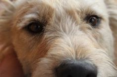 Dog Diabetes Symptoms and Natural Treatment   Diabetes is a life-threatening illness so you will need to closely monitor your dog's blood sugar and provide him with the correct medication. You will also need to carefully manage his diet.  Read More of This Article Here: http://www.holisticpetcare.info/dog-diabetes-symptoms-natural-treatment/