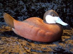 Vintage Ruddy Duck Drake Carving by Fred Plaumann (1984)