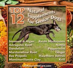 Natural Supplements for Senior Dogs