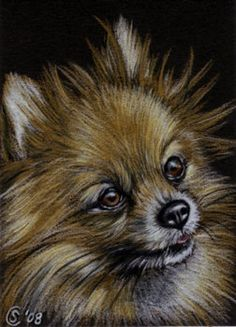 pomeranian pencil drawings | POMERANIAN dog puppy pet pencil painting Sandrine Curtiss Art Limited ...