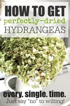 Get perfectly-dried hydrangea blooms every time with this easy step-by-step guide on how to dry hydrangeas. It's easier than you think. Hydrangea Not Blooming, Hydrangea Garden, Hydrangea Flower, Fresh Flowers, Dried Flowers, Beautiful Flowers, Home Design, Pot Jardin, Kraut