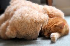 Everybody needs some snuggles ♥