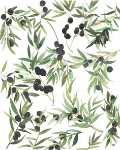 8x10 print on satin matte paper, original watercolour design featuring olive branches.