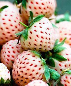 Vita jordgubbar 'Pine-Berry' - med smak av... ananas!