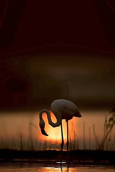 Every day, our editors select their 12 favorite photos recently uploaded to Your… - Animals Wild Life Wildlife Photography, Animal Photography, Amazing Photography, Foto Flamingo, Beautiful Birds, Animals Beautiful, Cool Pictures, Cool Photos, Flamingo Pictures