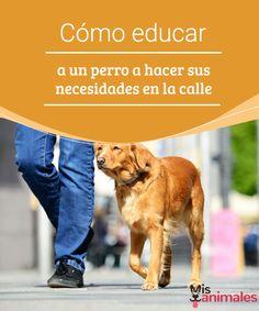 Cómo educar a un perro a hacer sus necesidades en la calle  Que un perro haga sus necesidades en la calle no es una tarea fácil y hay muchos mitos sobre cómo hacerlo. Se necesita un poco de paciencia para lograrlo. #educar #perros #adiestramiento