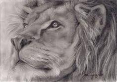 Resultado de imagem para como desenhar um leão realista