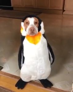 Funny Dogs Faces Hilarious Pets 59 New Ideas Funny Animal Videos, Cute Funny Animals, Funny Animal Pictures, Cute Baby Animals, Funny Cute, Funny Dogs, Funny Humor, Super Funny, Funny Videos