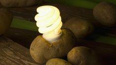 Vou testar aqui em casa!!  Uma batata pode fornecer energia para iluminar um quarto por 40 dias!