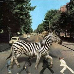 The Beatles, Abbey Road: Meanwhile in a Parallel Universe. Abbey Road, Best Funny Pictures, Funny Photos, Music Pictures, Weird Pictures, Pretty Pictures, Zebra Crossing, Beatles Art, Funny Images