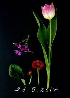 Kerää pihan ja metsäpolun kauneimmat kukat, sommittele ja kuvaa tummaa taustaa vasten. Kukkapäiväkirja koukuttaa.