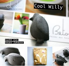 Billas Welt: Cool Willy