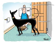 Another Richard Skipworth cartoon that describes life with a Greyhound to perfection!