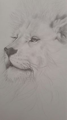 Lion #pencil #drawing
