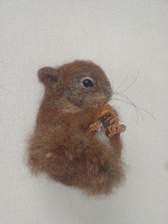 Squirrel Baby♥
