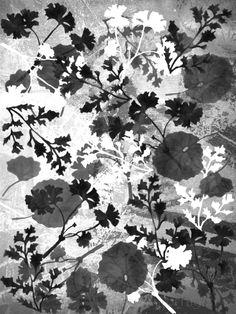 Into The Wild Monochrome Edition Print Design By Gemma Lofthouse ©