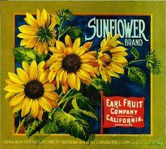 Sunflower Flowers Orange Citrus Fruit Crate Label Print   eBay