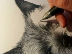 Color Pencil Drawing Tutorial Art Ed Central loves this tutorial on how to draw dog (YORKIE) fur - Animal Drawings, Art Drawings, Drawing Animals, Pencil Drawings, Horse Drawings, Pencil Art, How To Draw Fur, How To Draw Dogs, How To Draw Animals