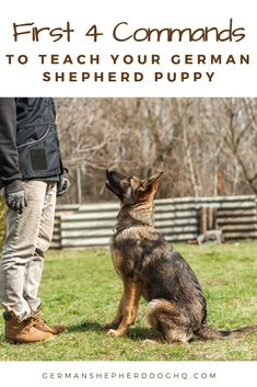 , These are the first 4 commands every German Shepherd puppy should learn and how . , These are the first 4 commands every German Shepherd puppy should learn and how to teach them. German Shepherd Training, German Shepherd Dogs, German Dogs, German Shepherds, Dog Minding, Schaefer, Dog Training Tips, Crate Training, Potty Training