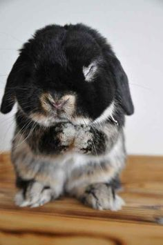 So let's hear it for the bunnies because they're the most lovable little fluffers around!