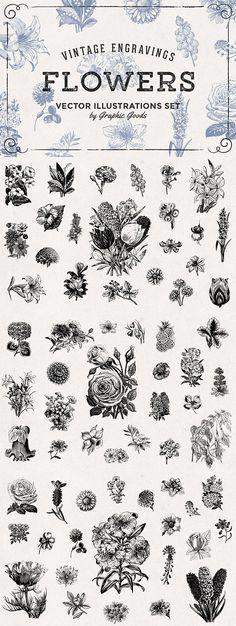 66 Flowers Vintage Engravings Set