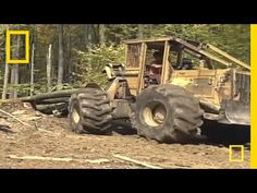Sustainable Logging | National Geographic - YouTube