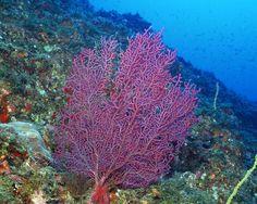 Underwater Sea Life | animal, sea-life, underwater-sea-life, animal-photos, sea-life-photos ...