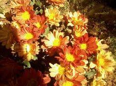 Imagini pentru soare de toamna