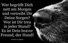 Hund, Van Tiggelen, Gedichte, Menschen, Leben, Weisheit, Welt, Erde, Gesellschaft, Gefühle, Grüße,
