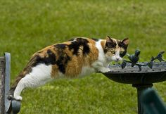 Look at this calico cat! Cute Funny Animals, Funny Animal Pictures, Funny Cats, Cat Fountain, Cat Drinking, Drinking Water, Water Animals, Here Kitty Kitty, Bad Kitty